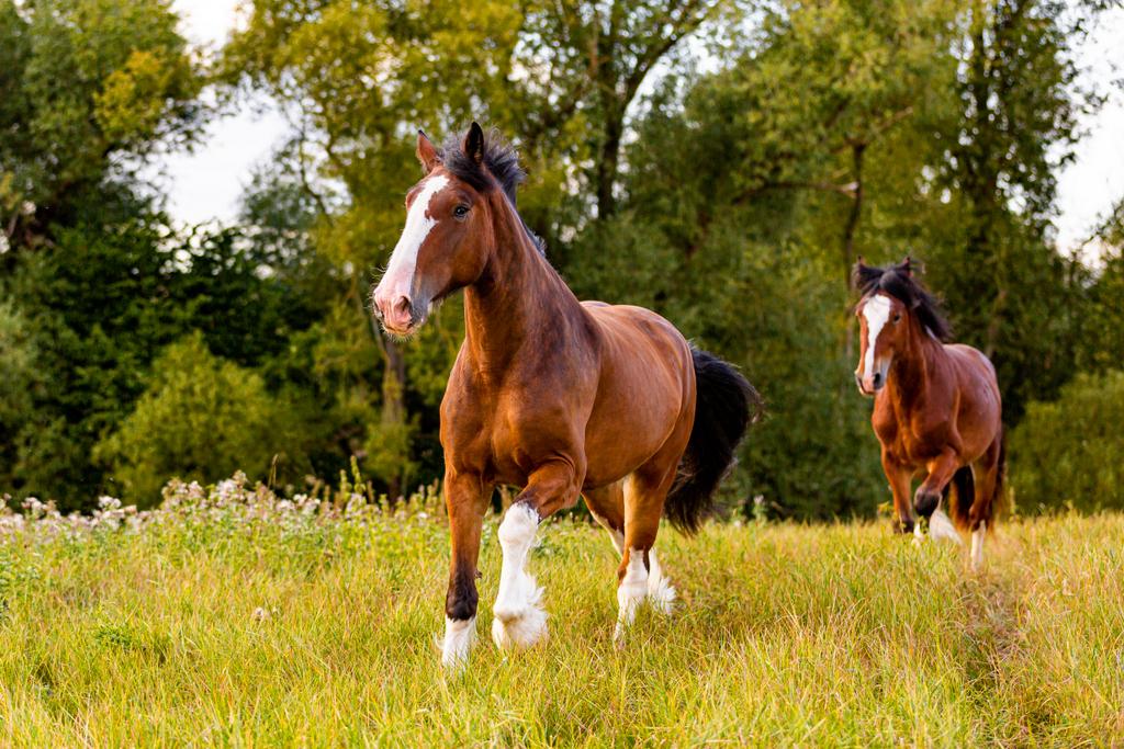 Geordi & Arthos