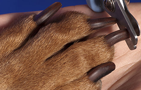 buy dog grooming products