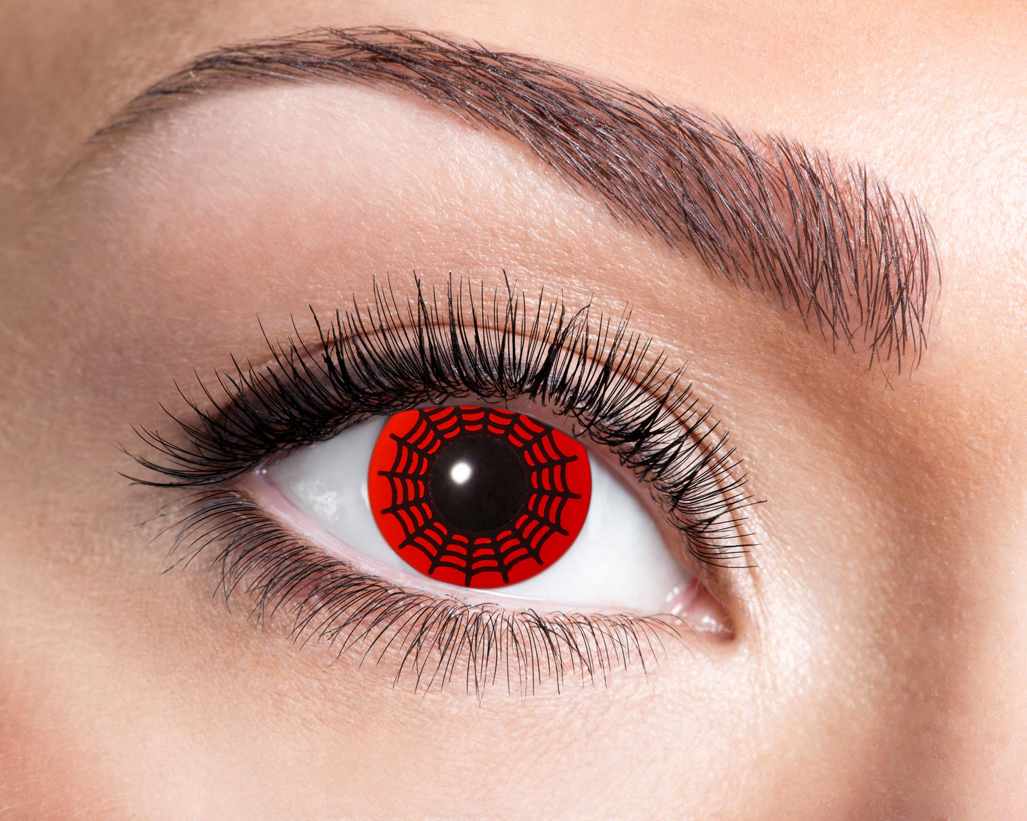 84063141.605 Red Spider