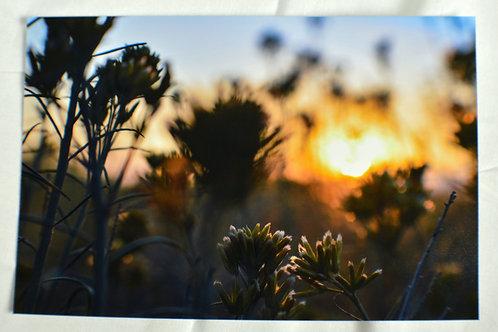 Sunrise at Mono Lake.