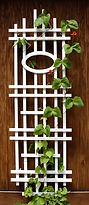 Trellis-With-Red-Beans - Copy.jpg