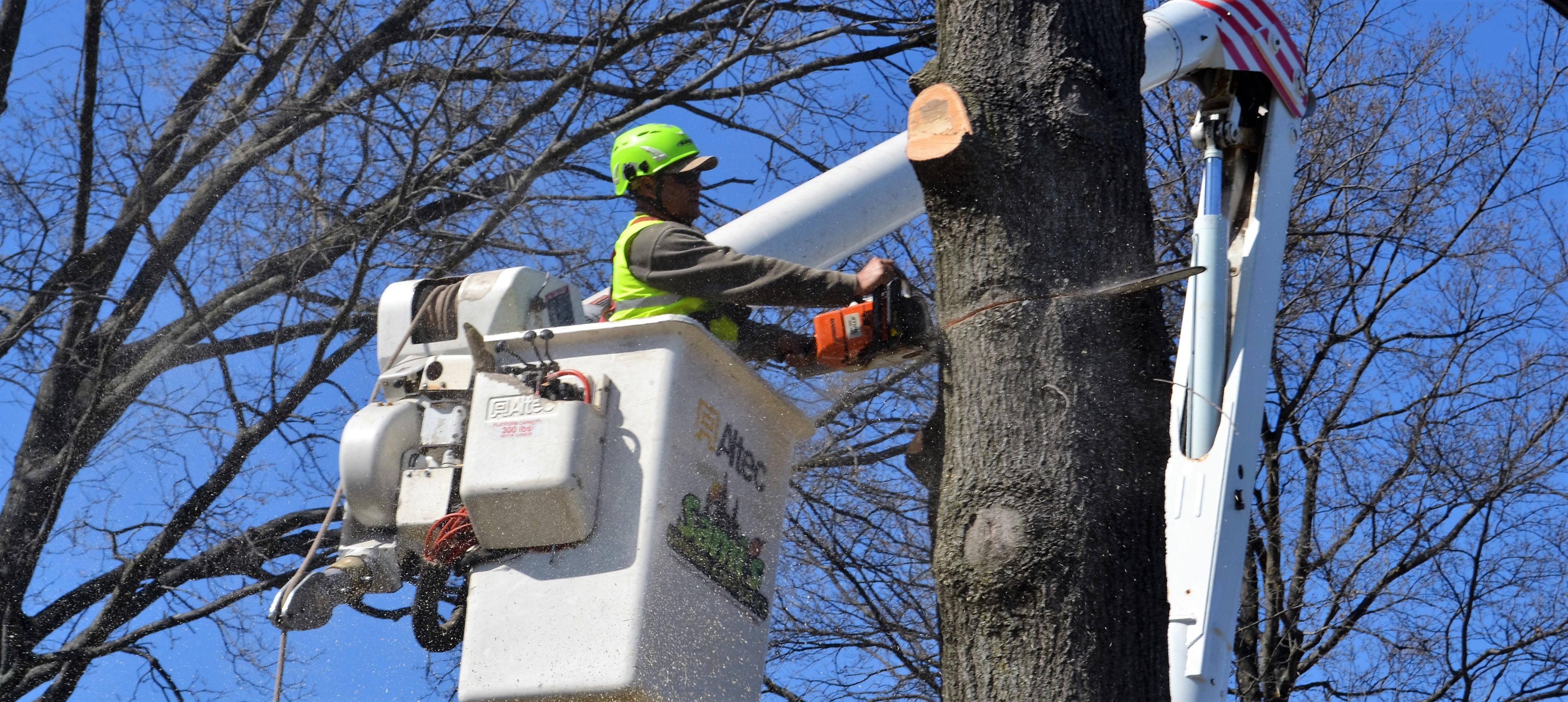 samis tree service