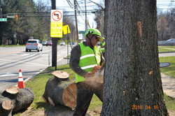 samis tree services 5