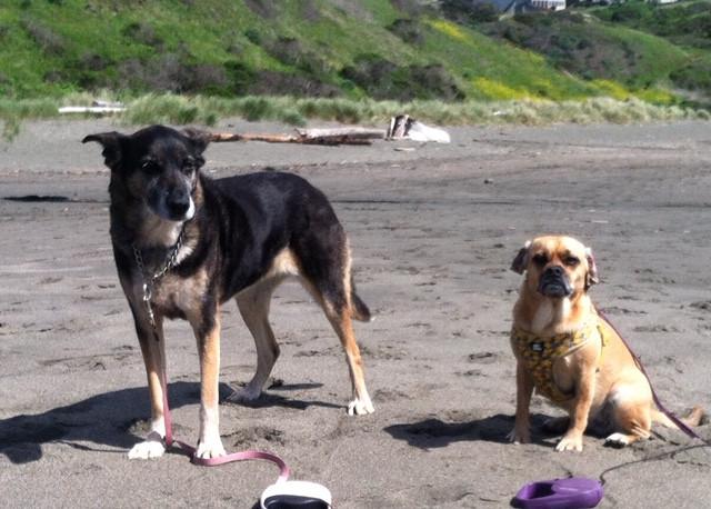 Dog Friendly Beach, Sonoma County