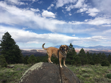 Peaks and Valleys of NoseWork