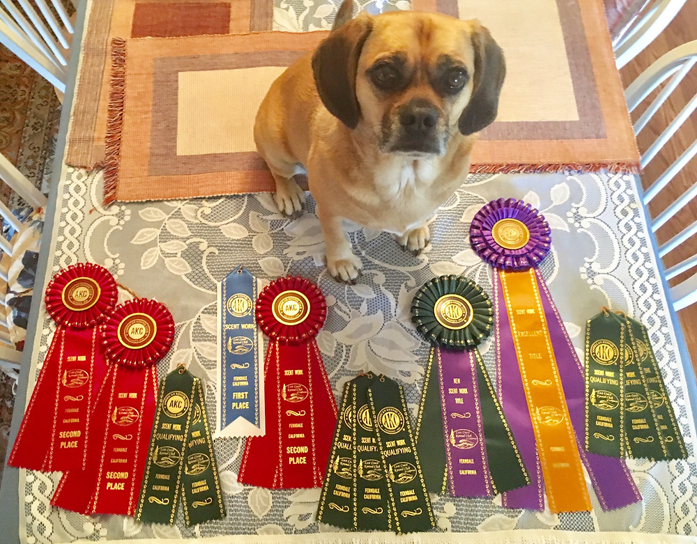 Puggle awards