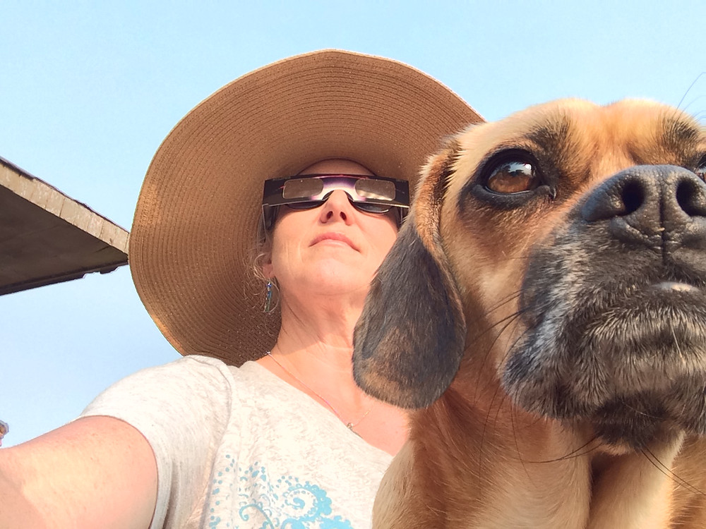 Puggle views Eclipse Sweet Home, Oregon