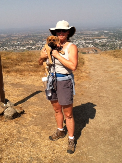 Hiking with Puggle dogs at Taylor Mountain Regional  Park, Santa Rosa, Sonoma County