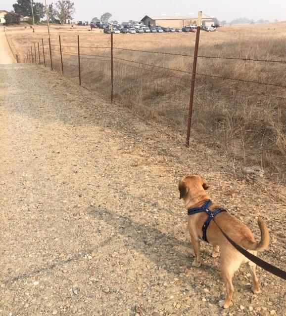 Dream Big Training Center, DD's Dog Training