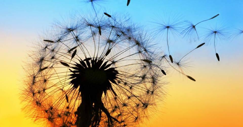 allergies, intolérances et sensibilités