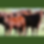 BeefTechnologyDay_SQUARE240x.png