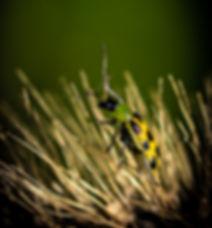 tiny bug.jpg