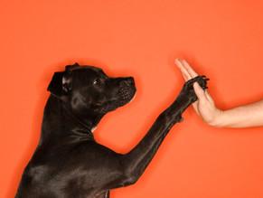 """Μάθετε στον σκύλο σας να """"το κολλάει"""""""