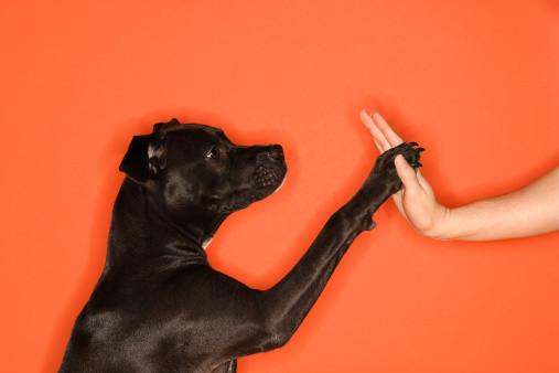 Μάθετε στον σκύλο σας να το κολλάει. Εύκολα κόλπα για τον σκύλο μου.