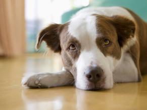 7 σημάδια πως ο σκύλος σας υποφέρει από αρθρίτιδα