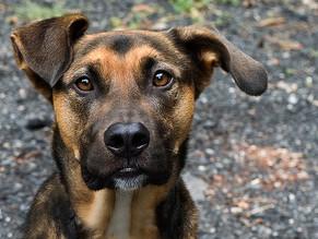 Ημίαιμο: Ένας μοναδικός σκύλος!