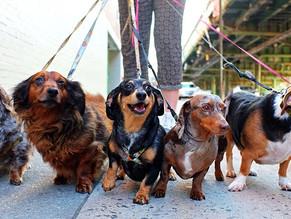 Tips για την βόλτα του σκύλου από τον εκπαιδευτή Cesar Millan