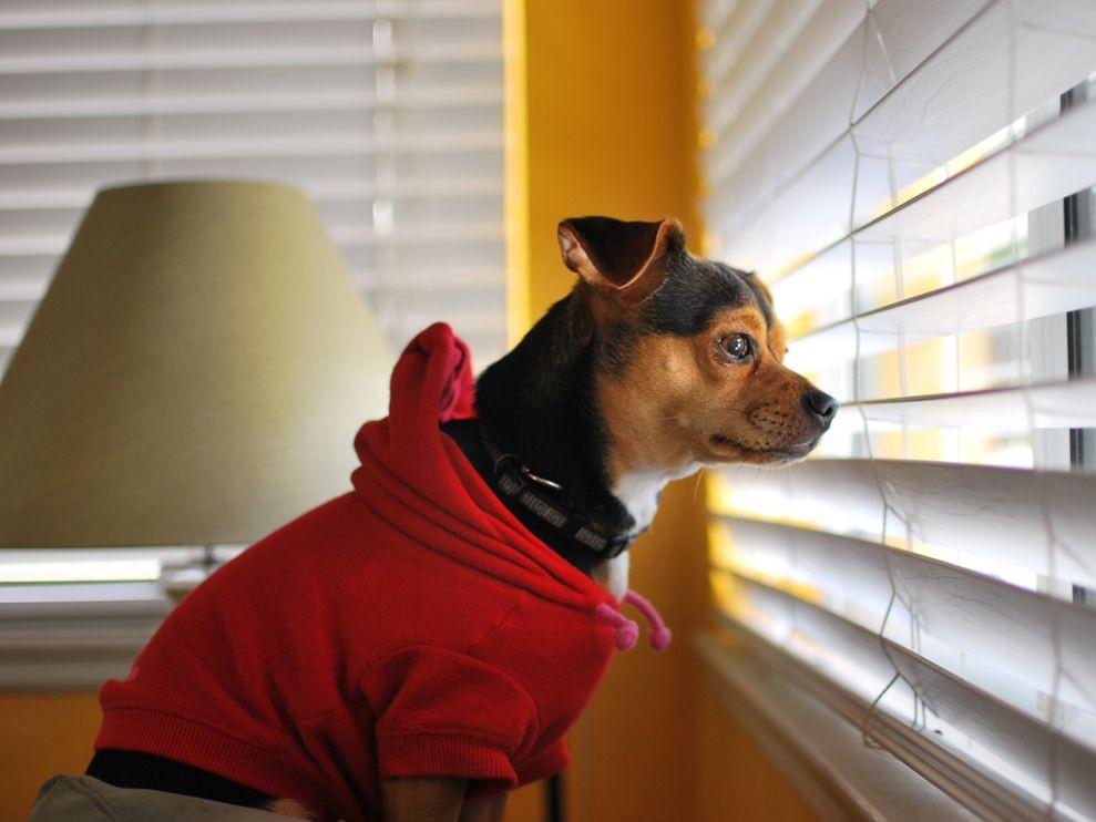 Ενδιαφέροντα στοιχεία για τους σκύλους. Οι σκύλοι έχουν αίσθηση του χρόνου και καταλαβαίνουν πόση ώρα λείπετε