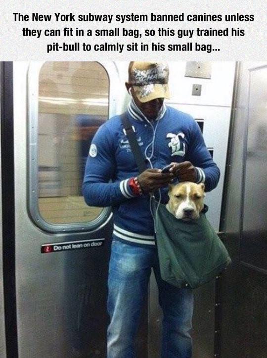 Επιτρέπονται οι σκύλοι στο μετρό λεωφορεία ΟΑΣΑ?