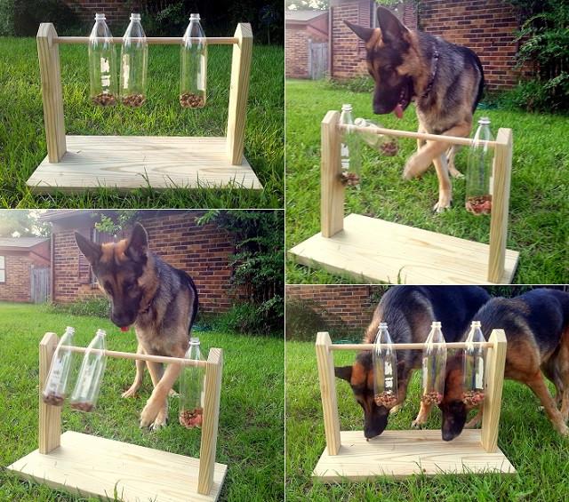 παιχνίδι diy για σκύλους λιχουδιές σε πλασιτκές μπουκάλες που γυρίζουν