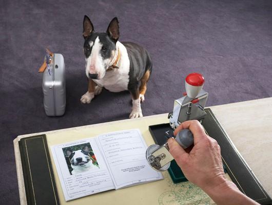 ταξίδι με σκύλο με αεροπλάνο νομοθεσία