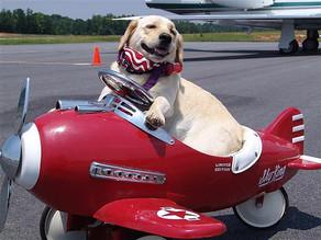 Σκύλος & Αεροπλάνο