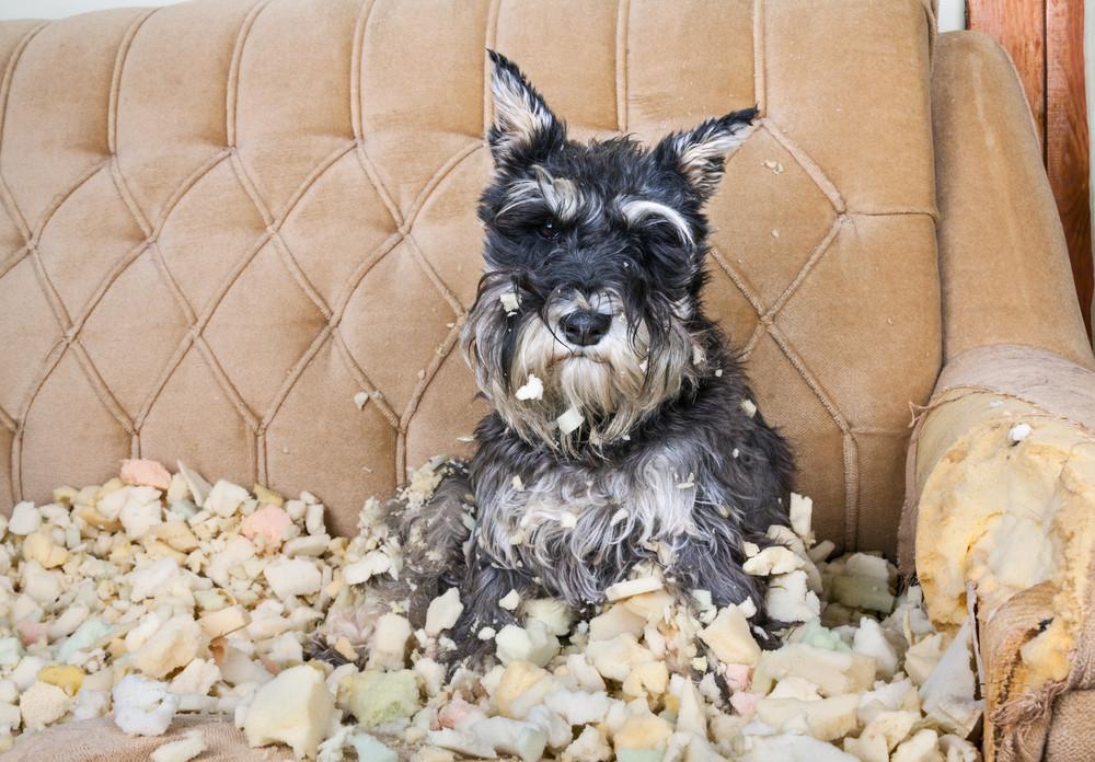 πως να μην μασάει ο σκύλος τα πράγματα στο σπίτι, απωθητικά σπρέι