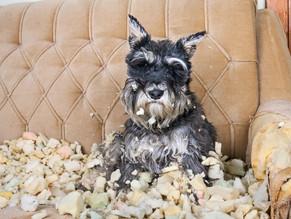Απωθητικά σπρέι για σκύλους