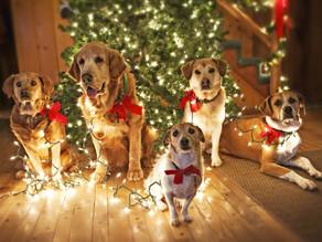 Οι επισκέπτες των γιορτών και ο σκύλος σας