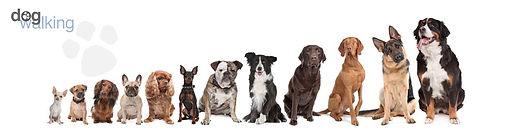 περιπατητής σκύλων dog walker