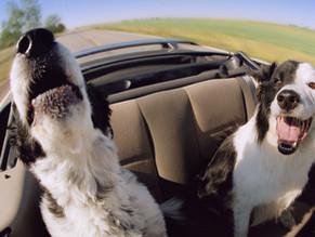 Σκύλος και ναυτία στο αυτοκίνητο