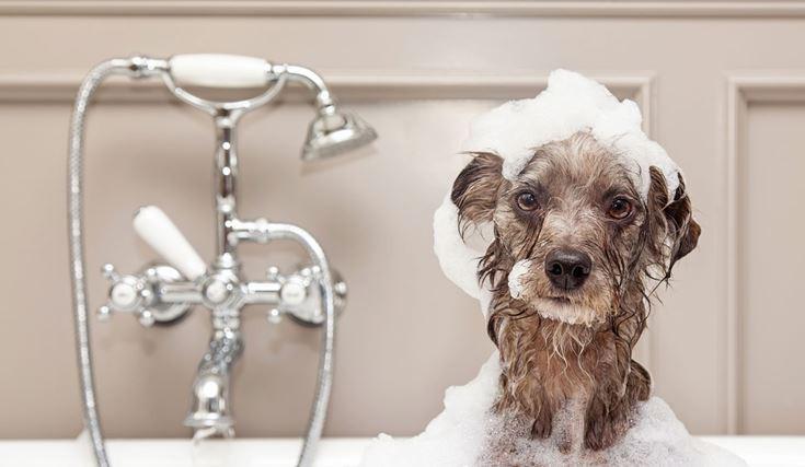 diy συνταγές για σαμπουάν σκύλου για ψύλλους, ευαίσθητο δέρμα που δεν απομακρύνει τα φυσικά έλαια