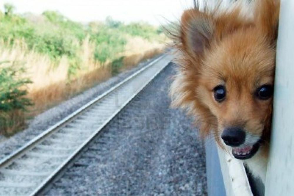 Σκύλος και μεταφορά με τραίνο προαστιακό