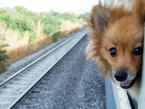 Σκύλος & Τρένο