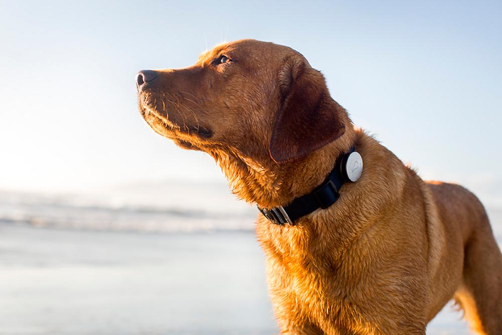 κολάρο για εντοπισμό σκύλου με gps, sim, wifi, smartphone,application