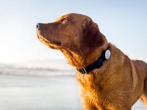 Εντοπίστε τον σκύλο σας από το κινητό σας!
