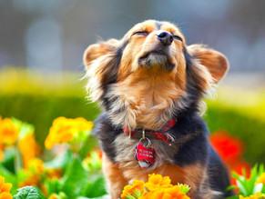 10 σημάδια πως ο σκύλος σας υποφέρει από εποχικές αλλεργίες