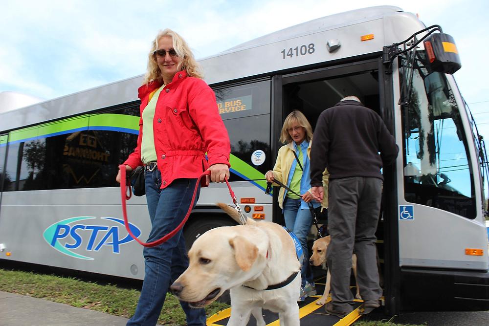 Μεταφορά σκύλου με ΚΤΕΛ - ταξίδι πούλμαν ΚΤΕΛ με σκύλο νομοθεσία