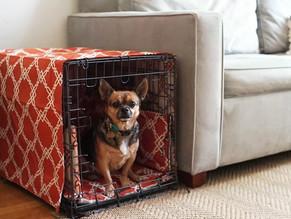 Μάθετε στον σκύλο σας να αγαπά το crate του