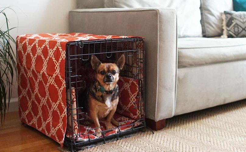 i pet taxi blog Εκπαίδευση σκύλου στην χρήση crate