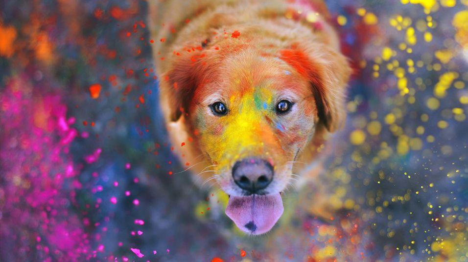 Τύπος προσωπικότητας σκύλου- dog personality type