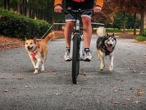 Κάντε ποδήλατο με τον σκύλο σας με ασφάλεια