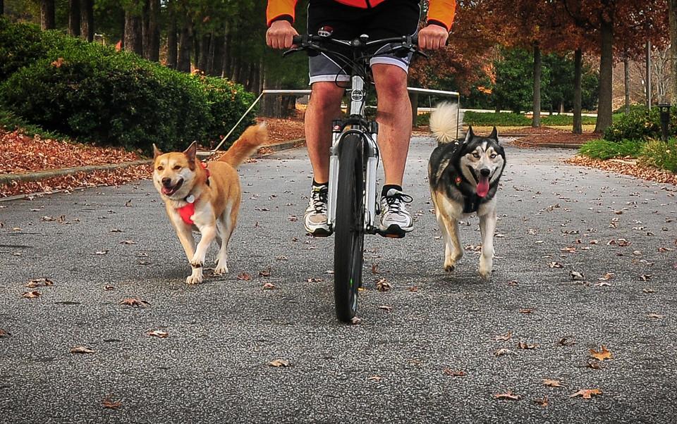 σκύλος ποδήλατο λουρί επέκταση ποδηλάτου