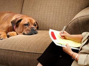 Οι συχνότερες εμμονές των σκύλων