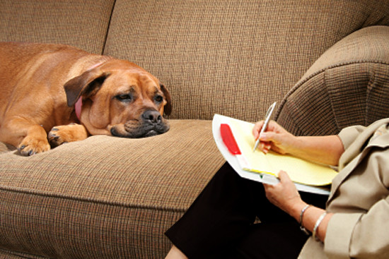Εμμονές στον σκύλο και πως τις αντιμετωπίζουμε