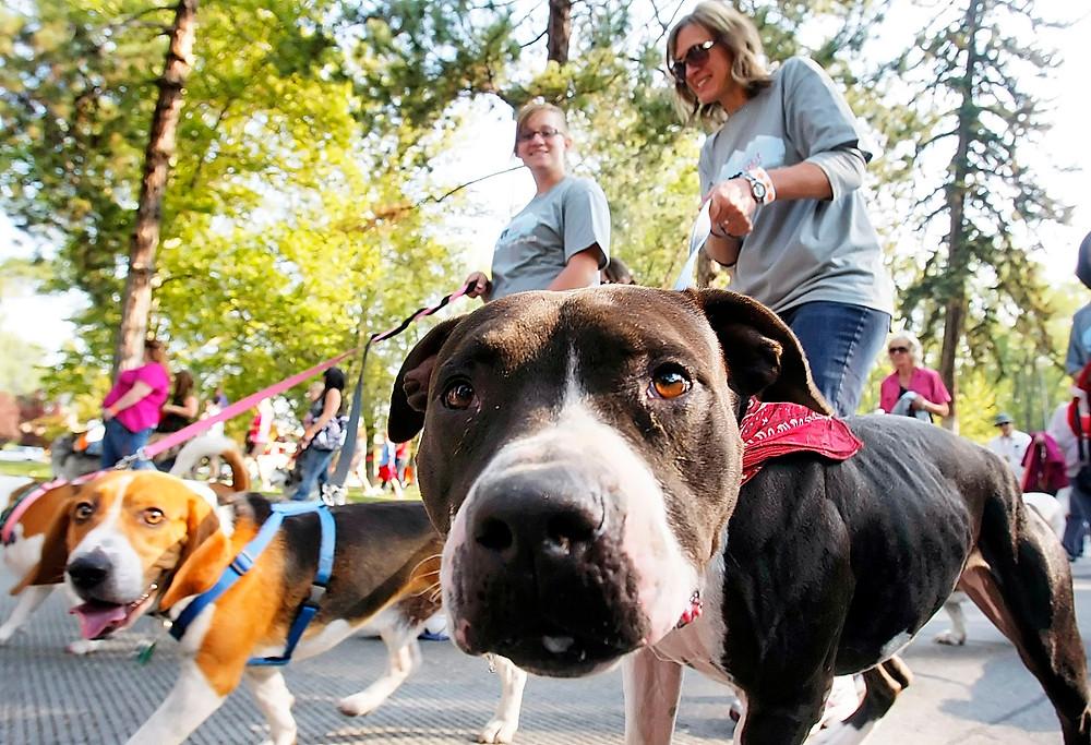 κολάρο ή σαμαράκι;Ποιο είναι καλύτερο για τον σκύλο;i pet taxi blog post