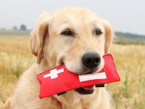 Φαρμακείο Σκύλου - Λίστα με όλα τα απαραίτητα