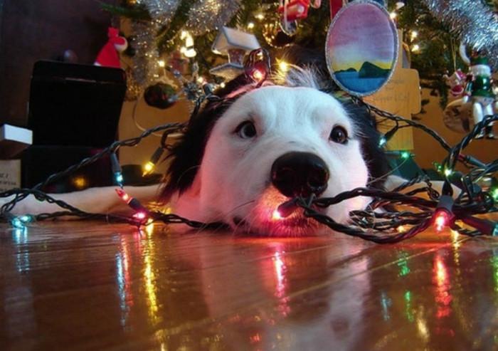 σκύλος και χριστουγεννιάτική διακόσμηση