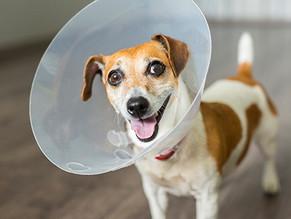 Τι είναι τα hot spots στους σκύλους;