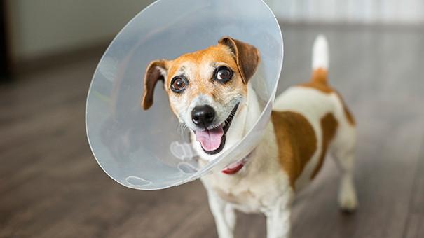 σκύλος hot spot - i pet taxi blog